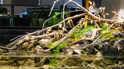 001_2013_biotope_aquarium_e_1_1