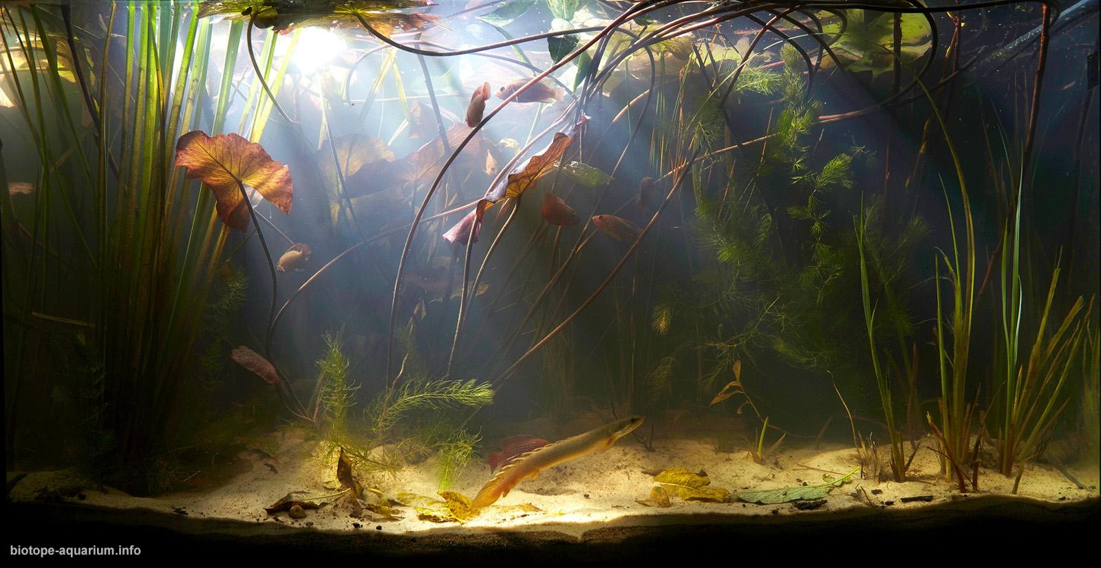 002_2013_biotope_aquarium_a_1_1