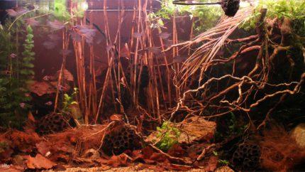 004_2013_biotope_aquarium_e_3_1