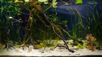 005_biotope-aquarium_ao-1-1