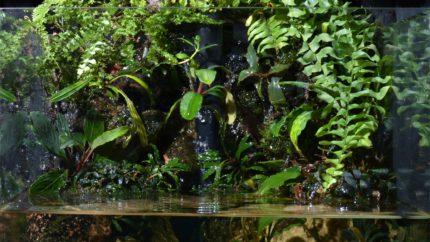 006_2013_biotope_aquarium_e_4_1