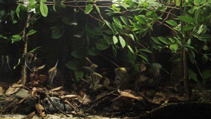 006_biotope-aquarium_sa-16-1