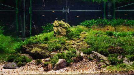 007_2013_biotope_aquarium_e_5_1