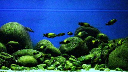 007_biotope-aquarium_a-9-1