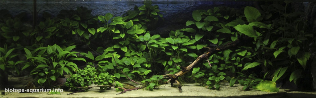 Mouth Of The Unknown African River 250 L Biotope Aquarium