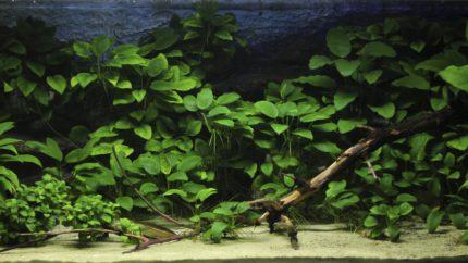 008_2013_biotope_aquarium_a_2_1