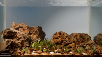 009_2013_biotope_aquarium_e_6_1