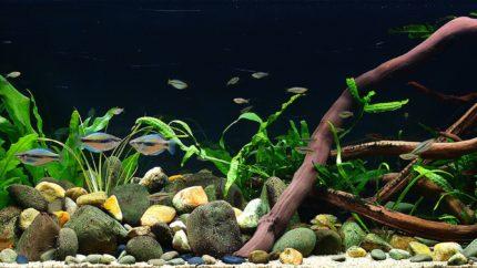 009_biotope-aquarium_ao-5-1