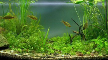 010_2013_biotope_aquarium_e_7_1