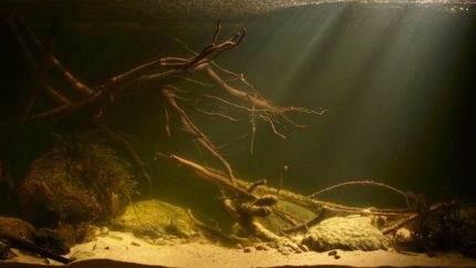 013_2013_biotope_aquarium_e_9_1