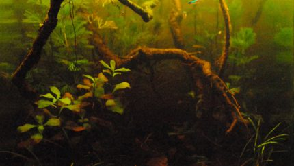 014_2013_biotope_aquarium_sa_1_1