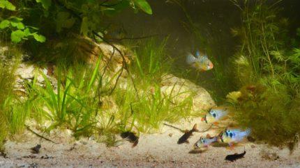 015_2013_biotope_aquarium_sa_2_1