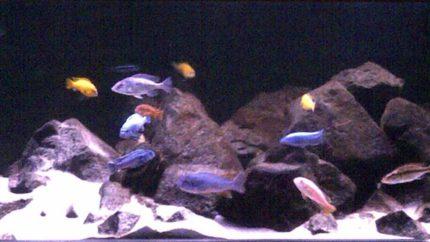 015_biotope-aquarium_a-5-1