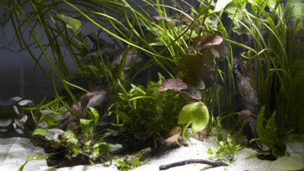 016_2013_biotope_aquarium_ao_1_1