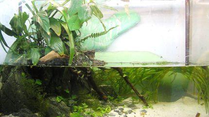 019_2013_biotope_aquarium_ao_2_1