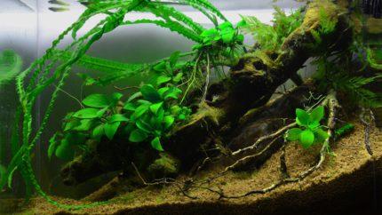 020_2013_biotope_aquarium_a_3_1