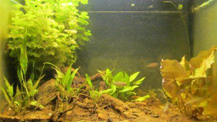 021_2013_biotope_aquarium_e_10_1
