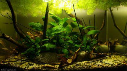 022_2013_biotope_aquarium_a_4_1