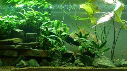 024_2013_biotope_aquarium_a_5_1