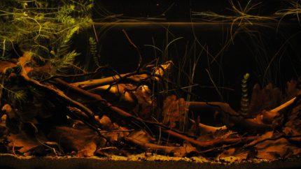 026_2013_biotope_aquarium_sa_6_1