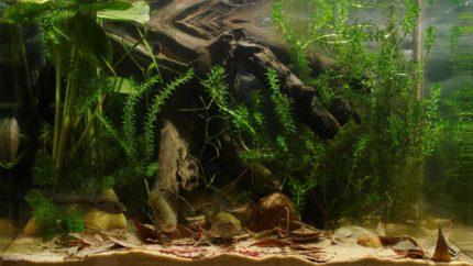 028_2013_biotope_aquarium_e_11_1