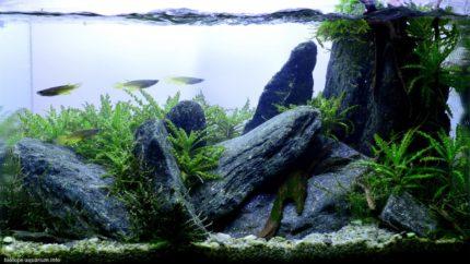 029_2013_biotope_aquarium_e_12_1