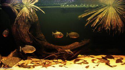 029_biotope-aquarium_sa-4-1