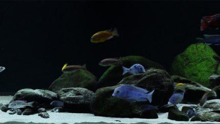 030_2013_biotope_aquarium_a_6_1