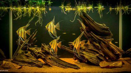 030_biotope-aquarium_sa-18-1