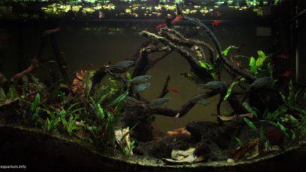 031_2013_biotope_aquarium_e_13_1