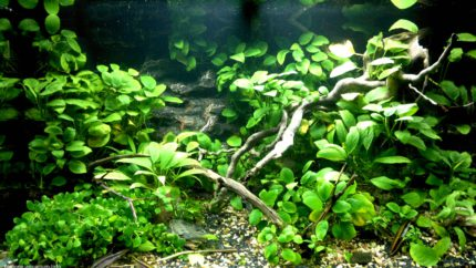 031_biotope-aquarium_a-15-1
