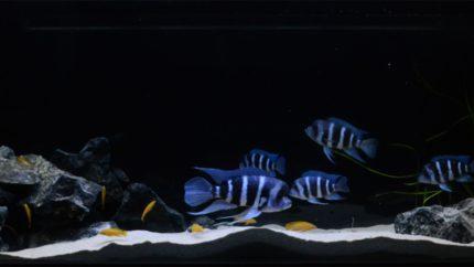 032_2013_biotope_aquarium_a_7_1