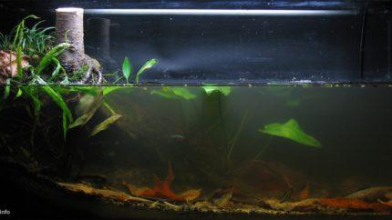 033_2013_biotope_aquarium_e_14_1