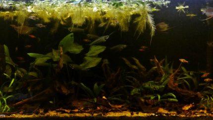 034_2013_biotope_aquarium_e_15_1