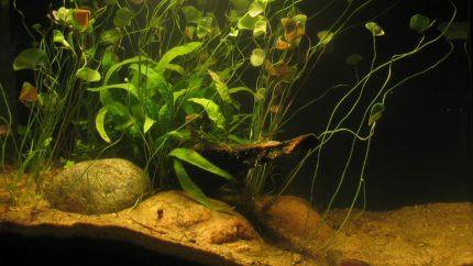 035_2013_biotope_aquarium_ao_3_1