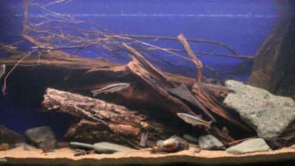036_2013_biotope_aquarium_e_16_1