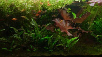 037_2013_biotope_aquarium_e_17_1
