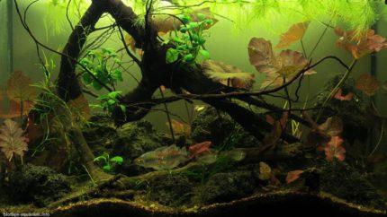 038_2013_biotope_aquarium_a_8_1