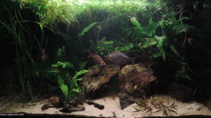 039_2013_biotope_aquarium_ao_4_1