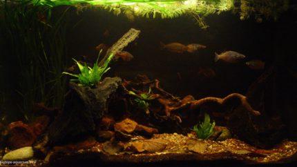 040_2013_biotope_aquarium_ao_5_1