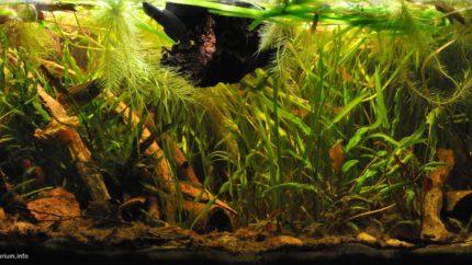 041_2013_biotope_aquarium_e_18_1