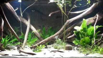043_2013_biotope_aquarium_sa_8_1
