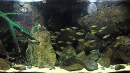 044_2013_biotope_aquarium_a_10_1