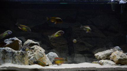 046_2013_biotope_aquarium_a_11_1