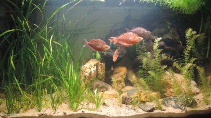 046_biotope-aquarium_ao-4-1