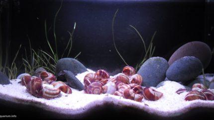 047_2013_biotope_aquarium_a_12_1
