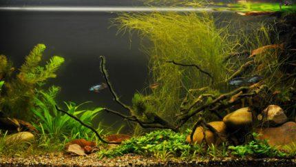 049_2013_biotope_aquarium_sa_9_1