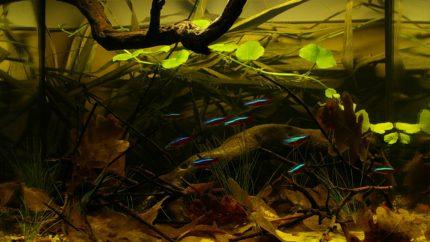 050_2013_biotope_aquarium_sa_10_1