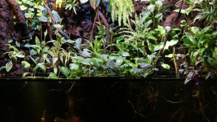 051_2013_biotope_aquarium_sa_11_1