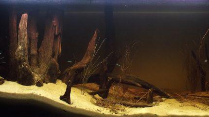 052_2013_biotope_aquarium_sa_12_1